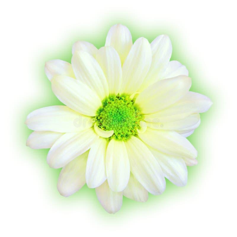 Download Minty στοκ εικόνα. εικόνα από απομονωμένος, finest, ζωηρόχρωμος - 92457