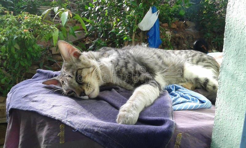 Minu mignon de l'amour u de chat son nom photo libre de droits