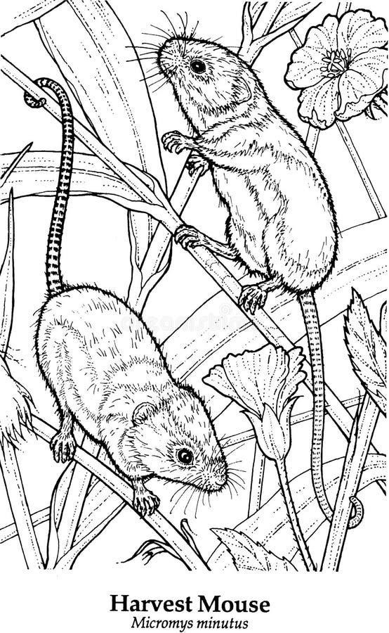 Minutus de Micromys do rato de colheita ilustração stock
