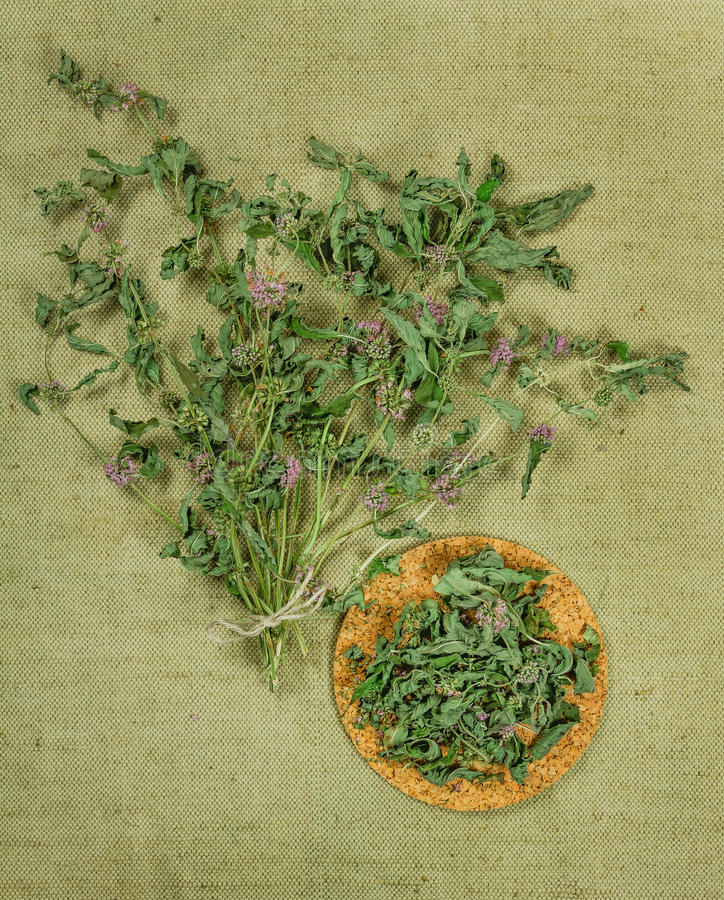 Minze, grüne Minze, Pfefferminz Getrocknete Kräuter Kräutermedizin, phytot stockfoto