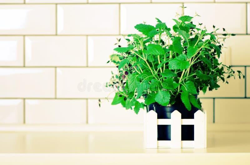 Minze, Thymian, Basilikum, Petersilie - aromatische organische Kräuter auf weißem Küchentisch, Ziegelsteinfliesenhintergrund Eing lizenzfreie stockfotos