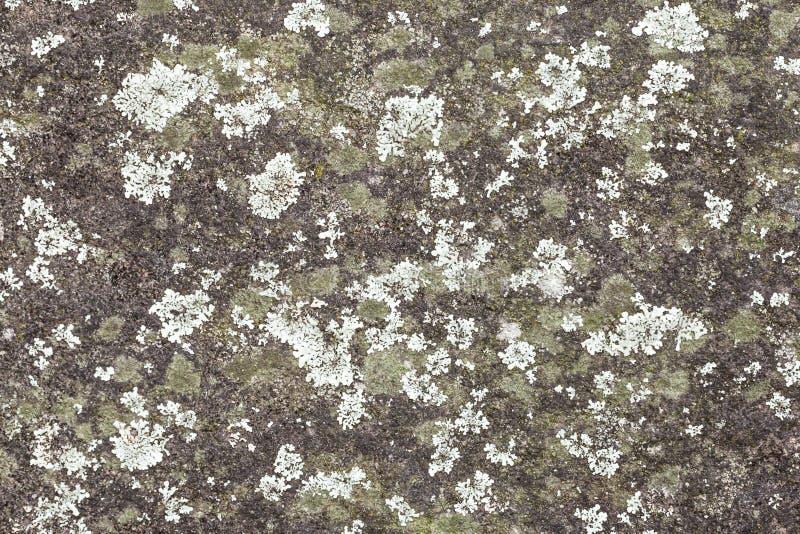 Minze und Grün farbige Flechte auf Grey Rock Wall lizenzfreies stockfoto