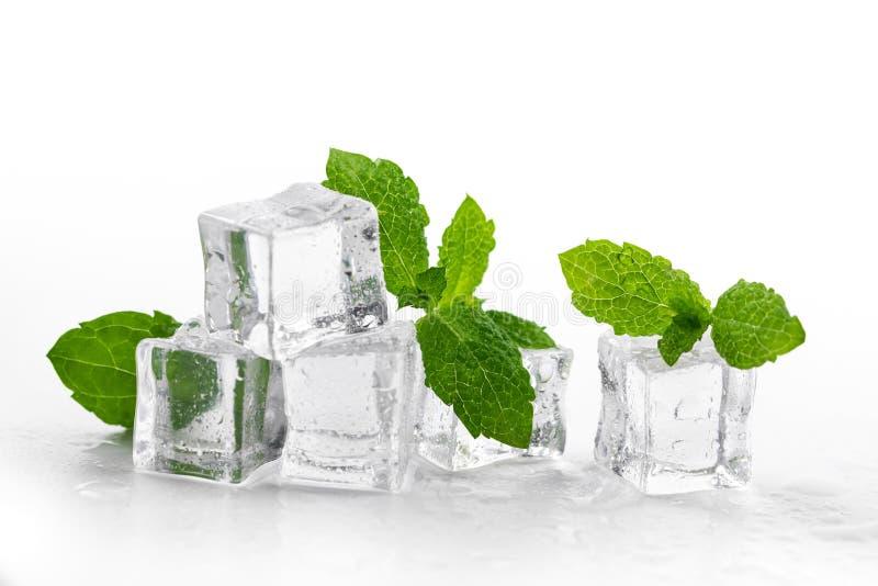 Minzen- und Eiswürfel auf weißem Hintergrund lizenzfreies stockbild