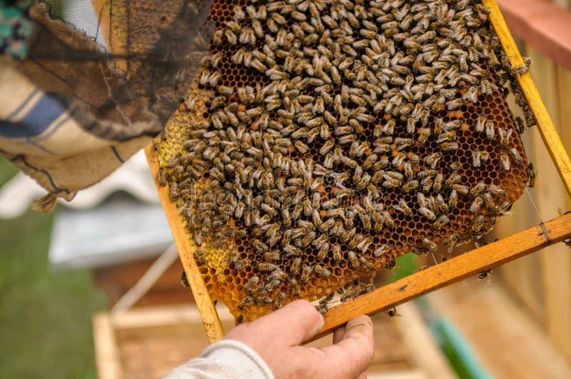Miodowe klatki na ramie otaczającej pszczołami Kuracyjny skutek obrazy royalty free