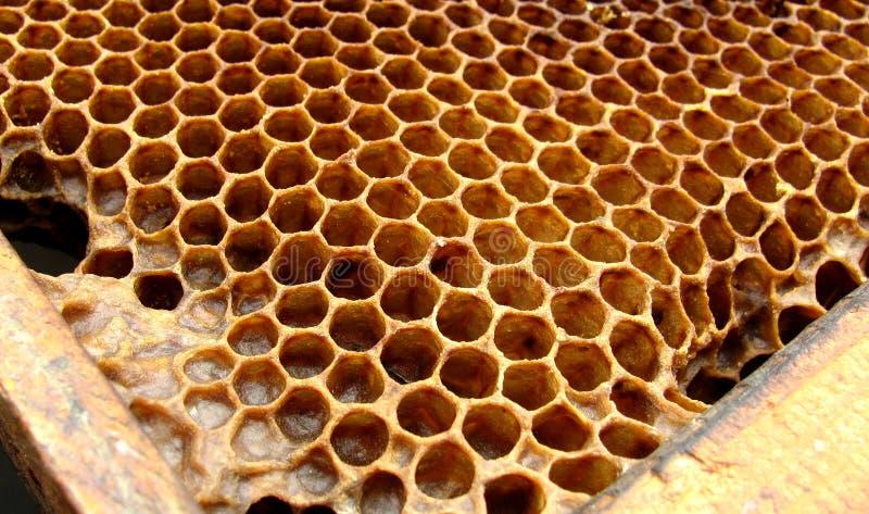miodowe pszczół komórki zdjęcie royalty free
