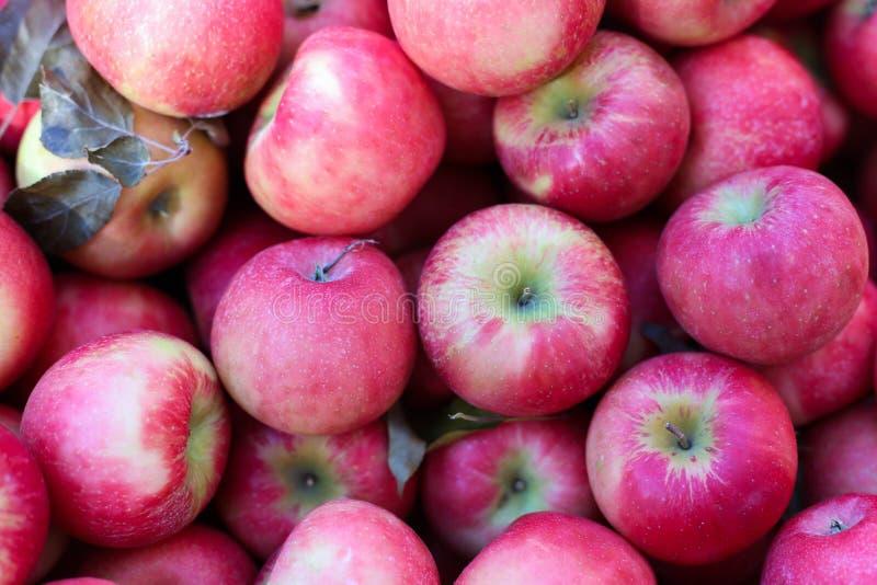 Miodowego chipsa jabłek owoc czerwony tło obrazy stock