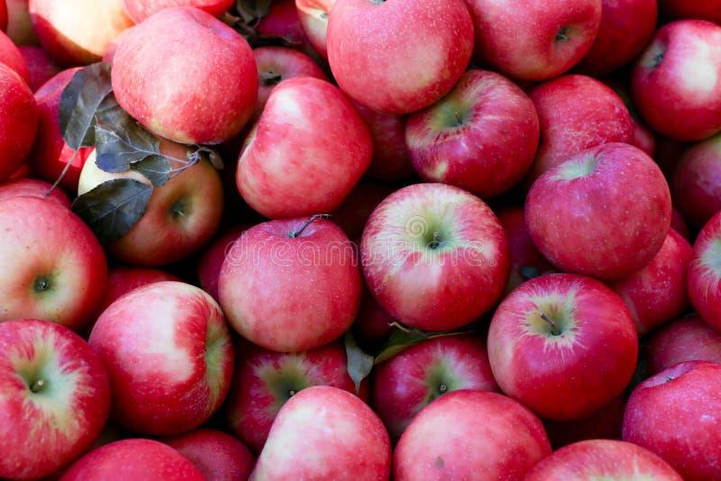 Miodowego chipsa jabłek owoc czerwony tło obrazy royalty free