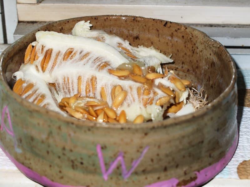 Miodowi rosa ziaren rośliny ziarna w ceramicznym pucharze zdjęcia royalty free