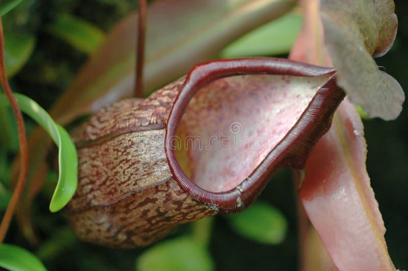 miotacz roślinnych obraz stock