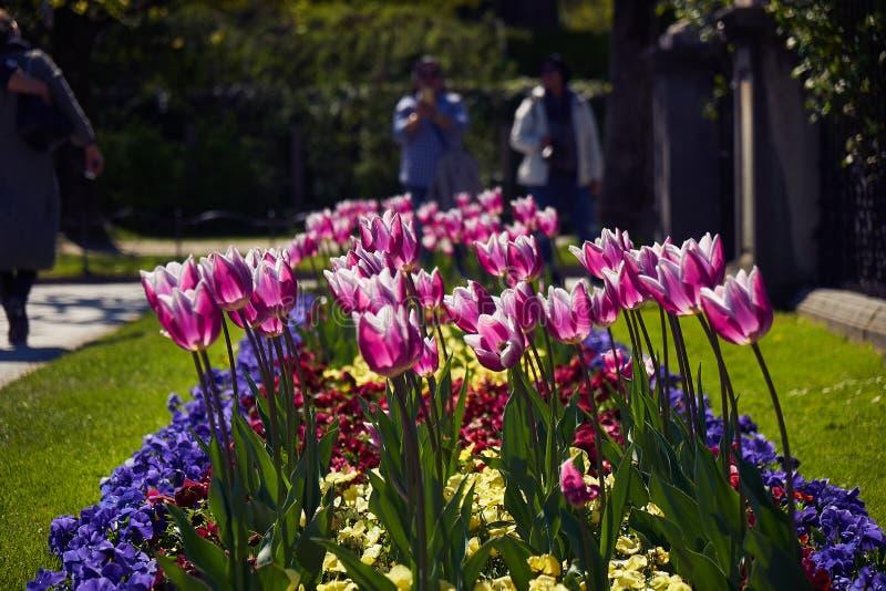 Mirabell宫殿和庭院春天萨尔茨堡,奥地利 库存照片