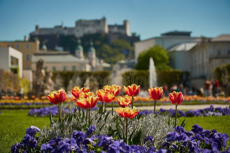 Mirabell slott och trädgård i vår Salzburg, Österrike royaltyfri bild