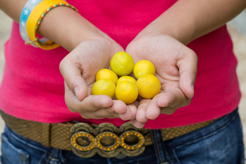 Download Mirabelle stock image. Image of farming, juicy, food - 25607207
