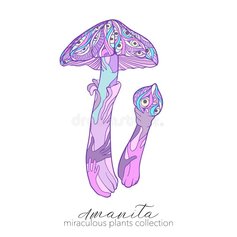 Miraculous plant. Amanita mushroom. Colored stock line vector illustration vector illustration