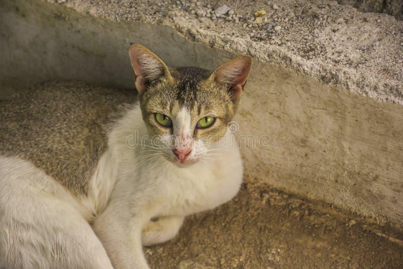 Mirada al aire libre de los gatos hermosos cerca de una puerta de madera foto de archivo libre de regalías