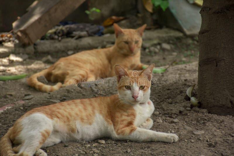 Mirada al aire libre de los gatos hermosos cerca de una puerta de madera imagenes de archivo