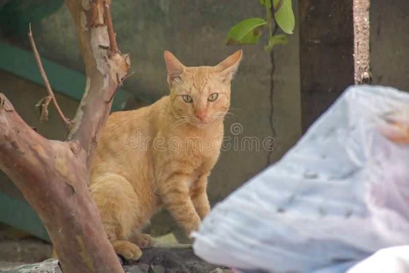 Mirada al aire libre de los gatos hermosos cerca de una puerta de madera imagen de archivo libre de regalías