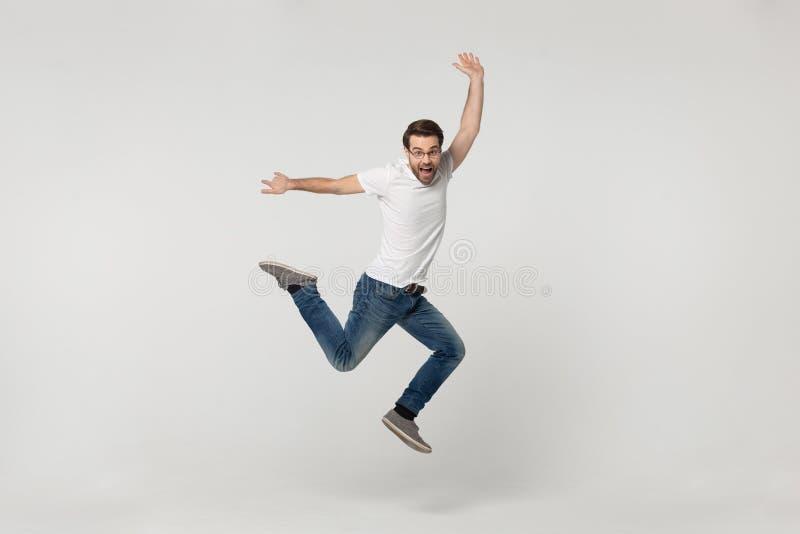 Mirada compañera vivaz en el salto de la cámara aislado en fondo gris foto de archivo libre de regalías