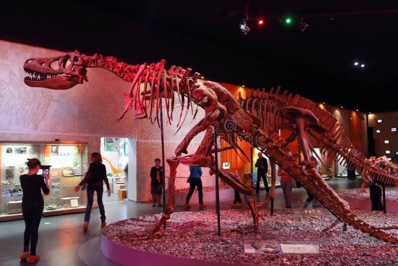 Mirada de la gente en los esqueletos del dinosaurio imagen de archivo