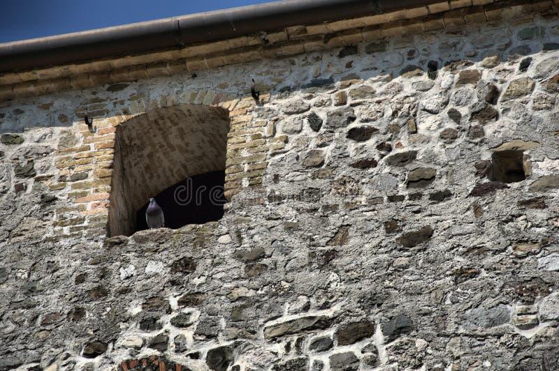 Mirada de la paloma alrededor en ventanas viejas de la casa imagen de archivo