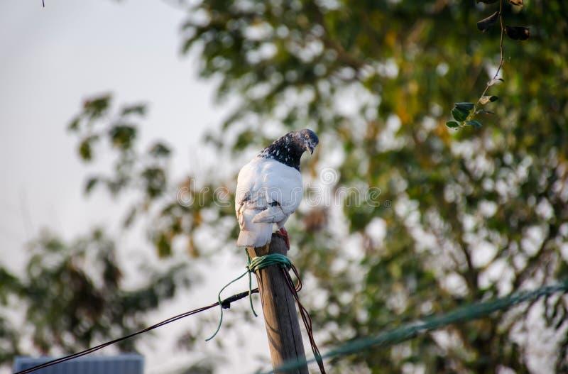 Mirada de la paloma en mí imagenes de archivo