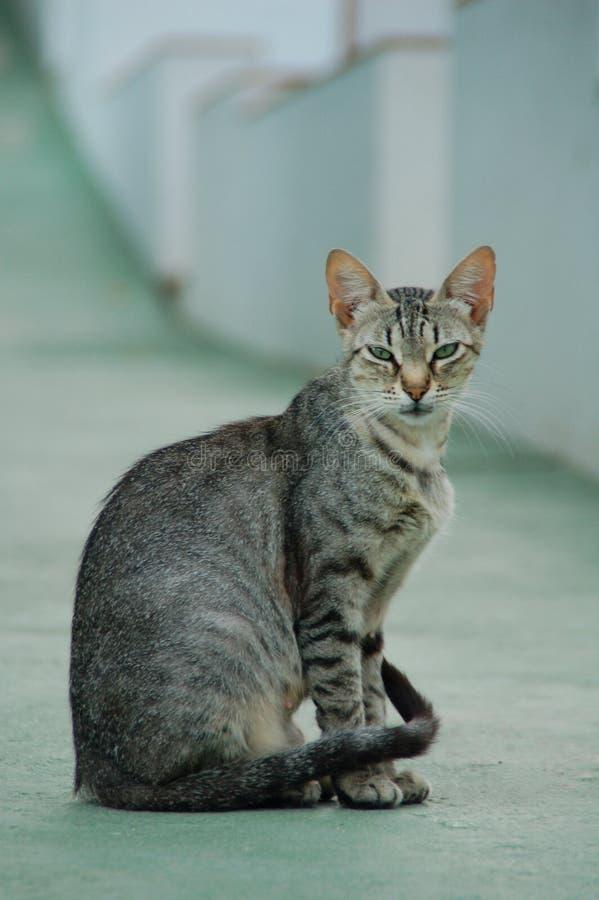 Mirada de los gatos fotos de archivo