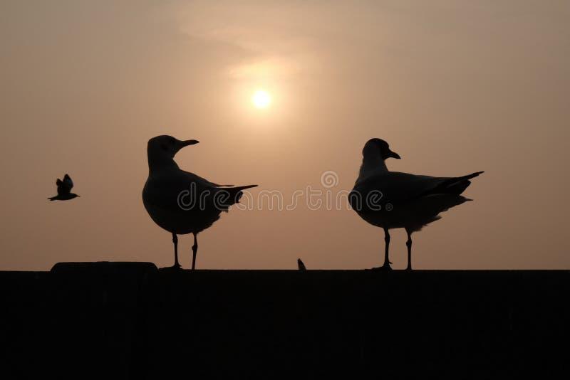 Mirada de los pájaros fotos de archivo