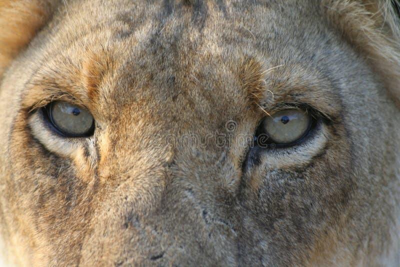 Download Mirada de usted foto de archivo. Imagen de animal, cinco - 7281680
