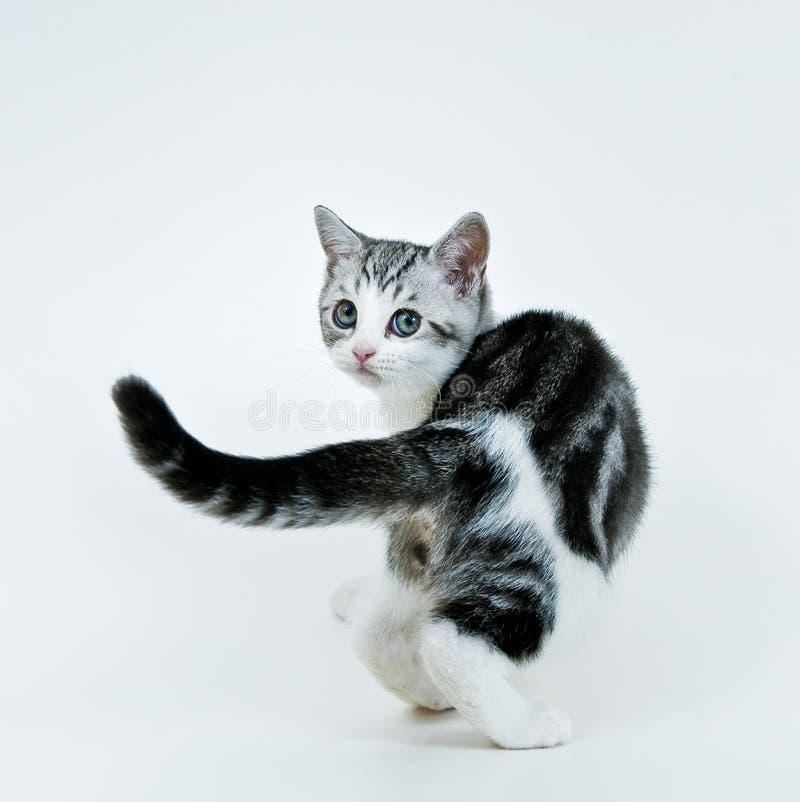 Mirada del gatito detrás foto de archivo