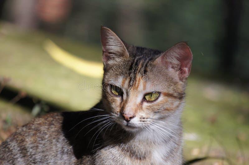 mirada del gato fotos de archivo libres de regalías
