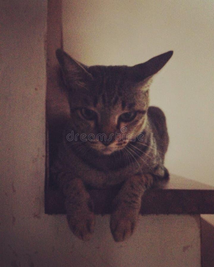 Mirada del gato abajo foto de archivo