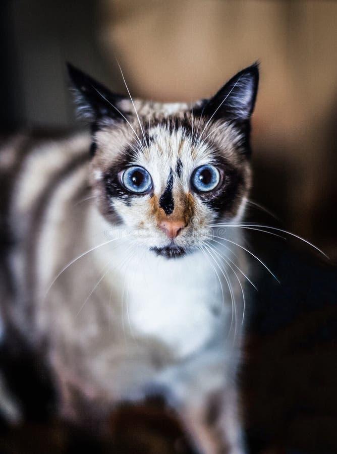 Mirada del gato en la cámara foto de archivo libre de regalías