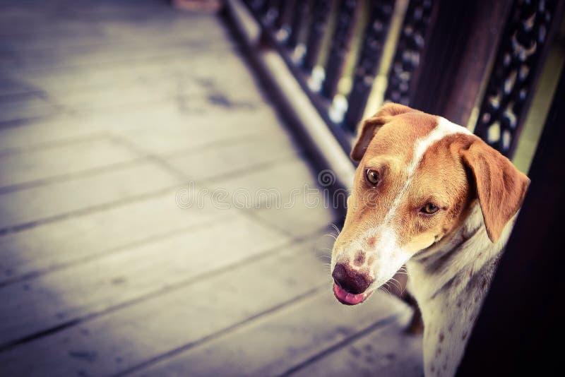 mirada del perro algo fotos de archivo libres de regalías