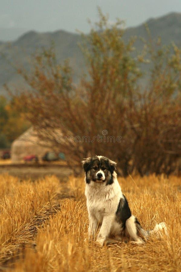 Mirada Del Perro En Mí Fotos de archivo libres de regalías