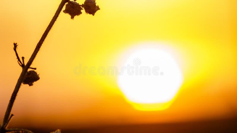 Mirada del sol imagen de archivo libre de regalías