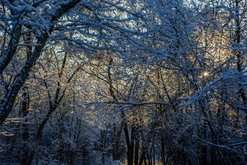 Mirada en el bosque de la nieve fotografía de archivo