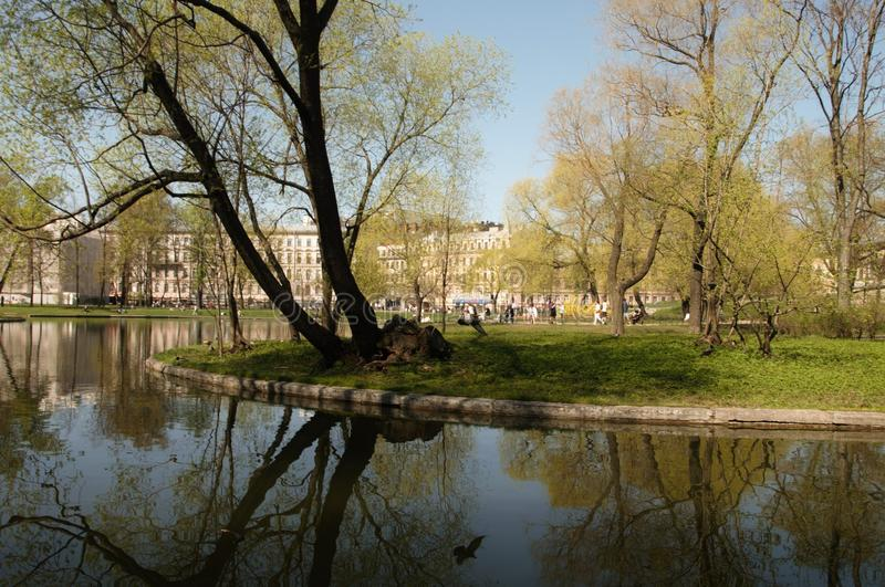 Mirada inclinable del espejo del agua de madera Verano calor greenery Hierba imagen de archivo