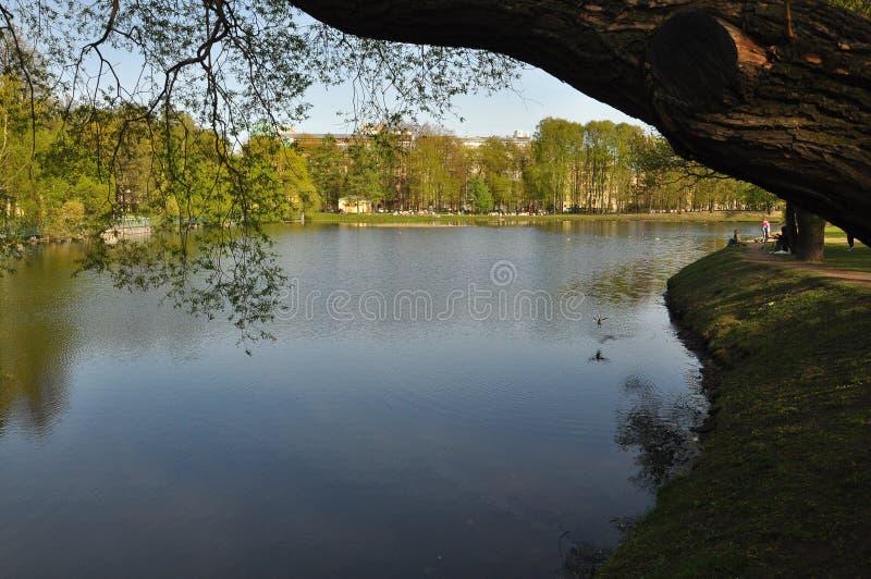 Mirada inclinable del espejo del agua de madera Verano calor greenery Hierba imágenes de archivo libres de regalías
