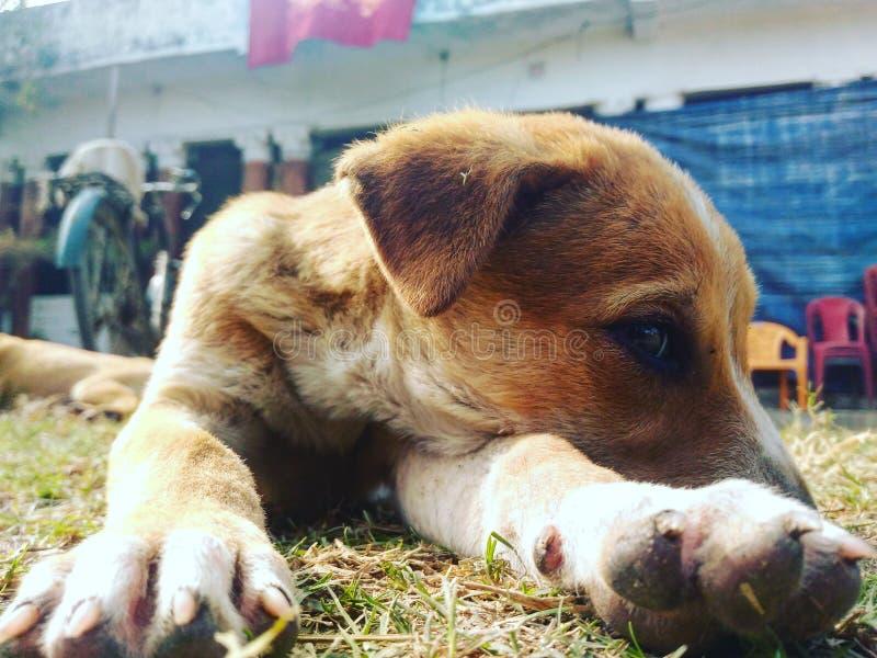 Mirada inocente del perro imagenes de archivo
