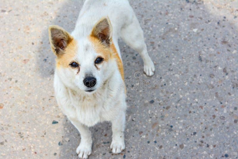 Mirada interesada de una situación sin hogar del perro en el camino foto de archivo libre de regalías