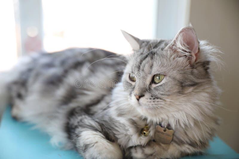 Mirada linda del gato imágenes de archivo libres de regalías