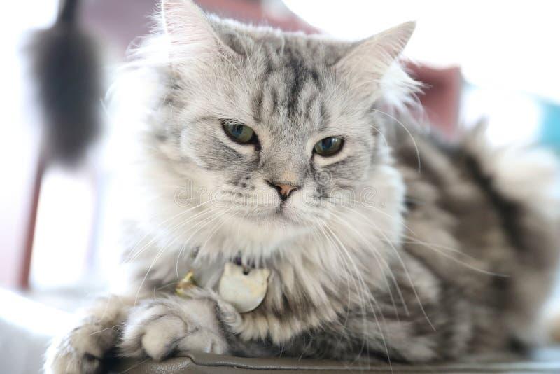 Mirada linda del gato foto de archivo