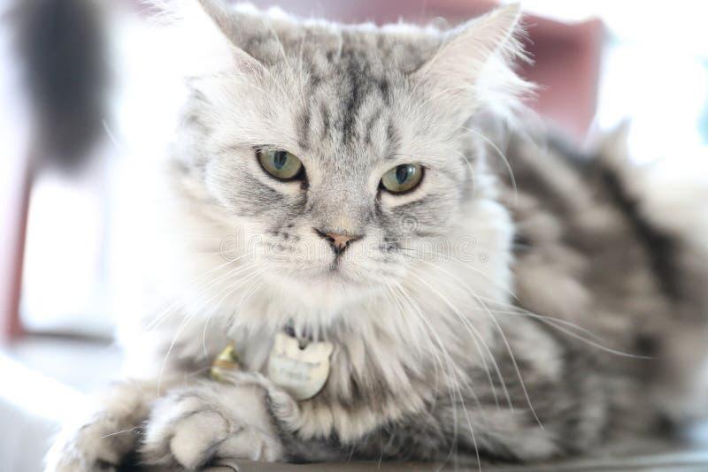 Mirada linda del gato fotos de archivo