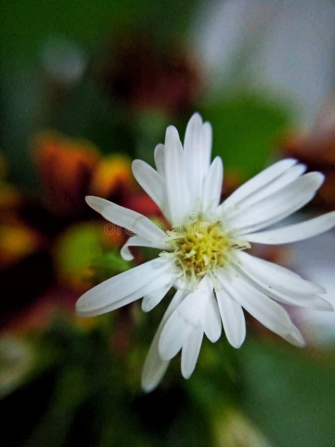 Mirada más atenta de la flor blanca fotos de archivo