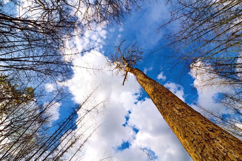Mirada para arriba del árbol con el cielo azul fotos de archivo libres de regalías