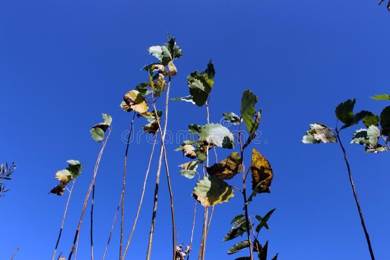 Mirada para arriba del árbol con el cielo azul imagen de archivo
