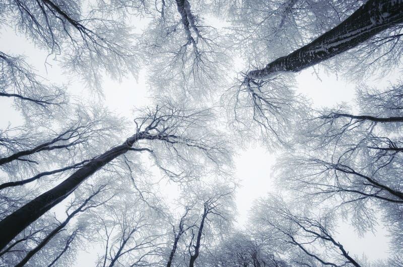 Mirada para arriba del bosque del invierno imagenes de archivo
