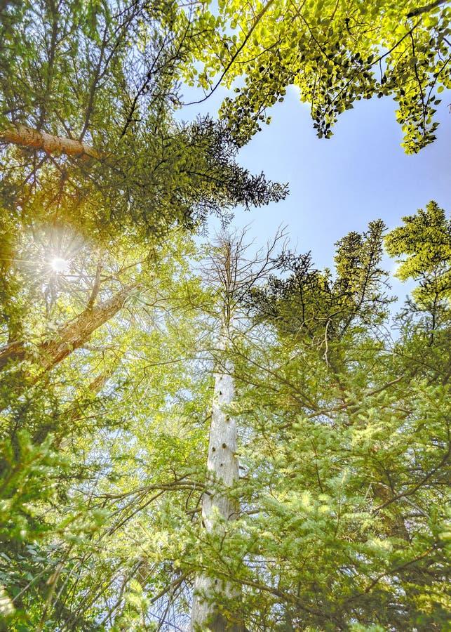 Mirada para arriba a través de árboles fotos de archivo