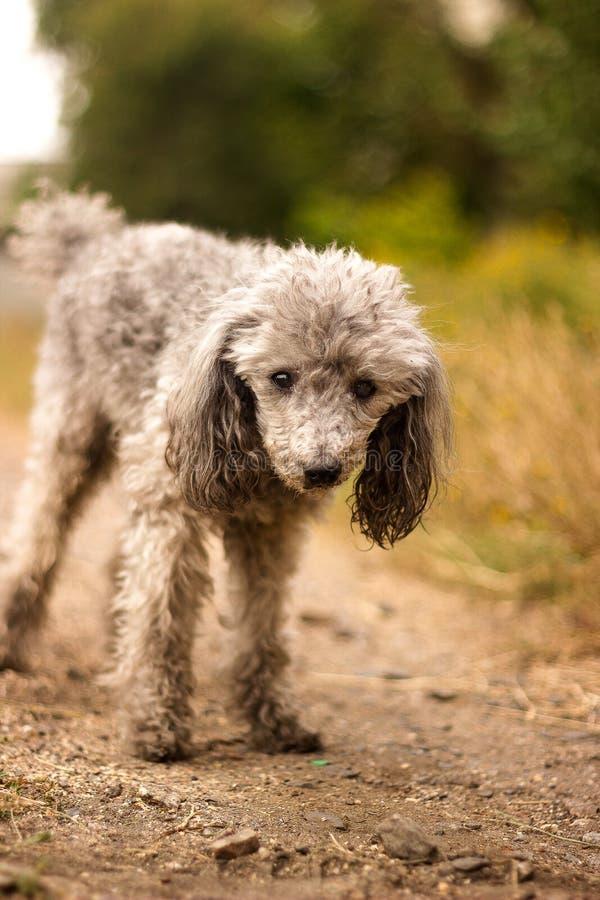 Mirada sonriente linda emocionada activa del animal doméstico Paseo exterior fresco Humor verde del playfool perro atento de la m fotos de archivo libres de regalías