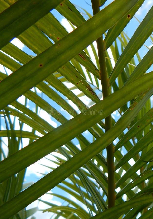Download Mirada A Través De Las Palmas Foto de archivo - Imagen de palmas, pequeño: 42427360
