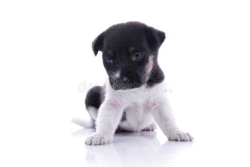 Mirada triste del perrito abajo imágenes de archivo libres de regalías